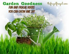 Garden Goodness: Fun and Frugal Herbs You Can Grow and Eat #frugal #save