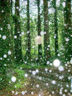 A forest of orbs.