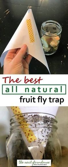 How do i get rid of fruit flies