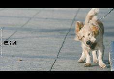 Bau Dog by Enea H. Medas  on 500px