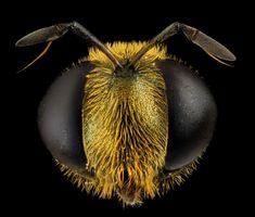 25-closes-em-olhos-de-abelhas-17.jpg (1200×1021)