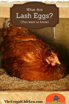 If you own chickens