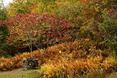 A stone well and fall foliage near Quabbin Reservoir in central Massachusetts.  Photo by Art Dodd