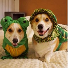Stop by our new #Encinitas location on Sat. Nov. 8 to meet these two cuties (Corgnelius & Stumphrey).
