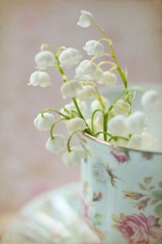 pretty white snowdrops in tea cup . . .look like Lily of the Valley