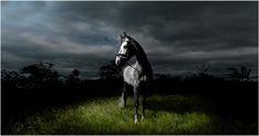 equestrianspiration.com - Matthew Seed, horse photographer