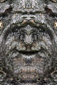 "Dream Creatures: Reflected Images of Tree Bark Reveal the Faces Hiding in the Forest Italian photographer Elido Turco taking photographs of tree bark and then mirroring the photographs discovered a whole society of ""Dream Creatures"" Weird Trees, Tree People, Tree Faces, Tree Bark, Tree Tree, Nature Spirits, Unique Trees, Tree Carving, Old Trees"