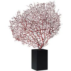 I pinned this Muriel Coral Statuette from the Design Declaration event at Joss and Main!