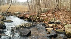 Stream running through Raven's Woods in East Lyme. (WFSB)