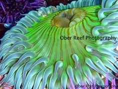 Patsee Ober's amazing underwater photography