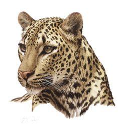 Wildlife Paintings, Wildlife Art, Animal Paintings, Animal Drawings, Pencil Drawings, Big Cats Art, Cat Art, List Of Big Cats, Arte Zebra