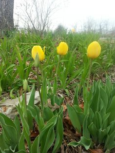 . Spring Blooms, Stuffed Peppers, Vegetables, Stuffed Pepper, Vegetable Recipes, Stuffed Sweet Peppers, Veggies, Spring Colors
