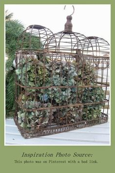 Dried Hydrangea Ideas