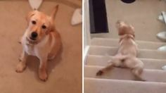 Watch this pup's adorable technique for going down the stairs