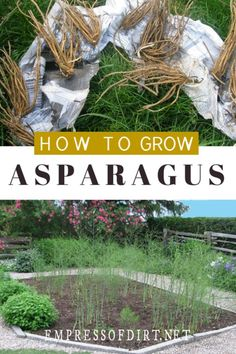 Organic Gardening Supplies Needed For Newbies Learn How To Grow Perennial Asparagus By Planting Crowns And Enjoy Delicious Veggies Year After Year. Organic Vegetables, Growing Vegetables, Asparagus Garden, Grow Asparagus, Pot Jardin, Organic Gardening Tips, Vegetable Gardening, Gardening Books, Garden Soil
