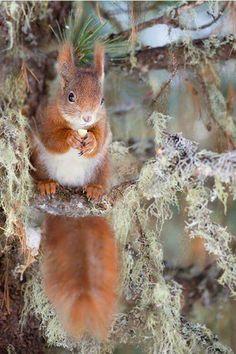 Cute little squirrel! :)