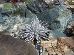 Click image for larger version    Name:plant pictures 036.jpg  Views:6  Size:111.5 KB  ID:3203