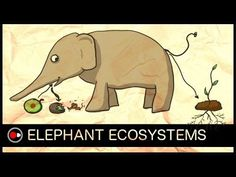 Brilliant 4 Minute Animation Will Convince Anyone why it's Important to Protect Big Animals…Like Elephants (VIDEO) Elephant Gif, African Elephant, Nutrient Cycle, Keystone Species, One Green Planet, Save The Elephants, Big Animals, Teaching Biology, Adventure Tours