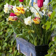 Spring window box..