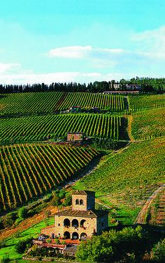 Castello d'Albola vineyard, Radda in Chianti, Tuscany, Italy