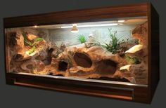 Best Absolutely Free Reptile Terrarium habitats Popular There isn't any doubt of which creating a pet may bring uncounted fulfillment so that you can someone else's l. Best Absolutely Free Reptile Terrarium habitats P Terrarium Diy, Terrariums Gecko, Lizard Terrarium, Reptile Habitat, Reptile Room, Reptile Cage, Reptile Enclosure, Bearded Dragon Vivarium, Bearded Dragon Terrarium