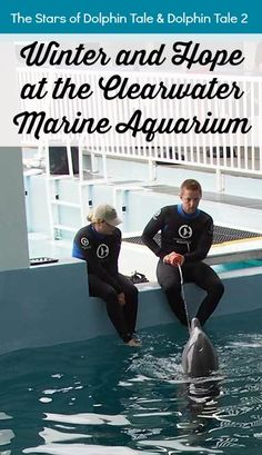 Winter and Hope at the Clearwater Marine Aquarium Clearwater Beach Florida