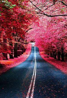 Autumn Road - Photo by Roy Wangsa