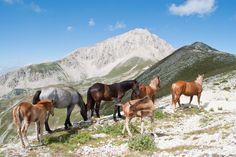 Free horses near the Rifugio Duca degli Abruzzi on the Gran Sasso Mountain   https://www.facebook.com/slowParks