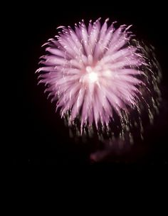 pink firework - CC
