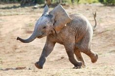 That's one happy elephant :)
