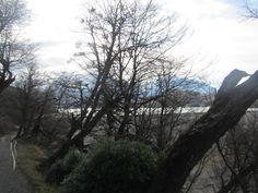 Parque Nacional Torres del Paine. XII Región de Magallanes. Chile.