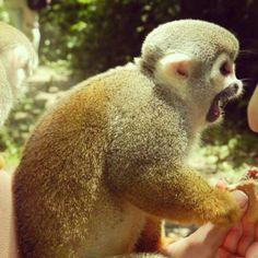 Isla de los monos - Amazonas