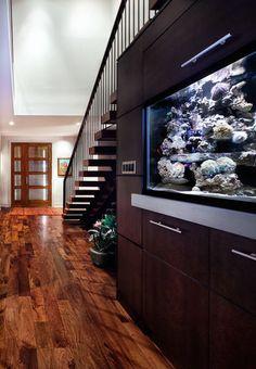 Saltwater fish tank   under stairs