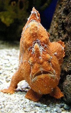Demon fishy! | Flickr - Photo by Spamily