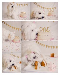 Dog Birthday Quotes, Dog First Birthday, Cat Birthday, Animal Birthday, Birthday Cake, Puppy Birthday Parties, Cake Dog, 1st Birthday Photoshoot, 1st Birthday Pictures