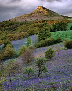 Looking across fields of bluebells towards Roseberry Topping, North Yorkshire, England, by Joe Cornish.