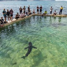 Shark recovers in Sydney Ocean Pool at Manly Beach