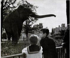 Berlin 1945 Siam im Berliner Zoo