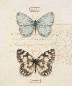 Art In Motion Butterfly Sketch, Butterfly Illustration, Butterfly Dragon, Butterfly Art, Illustration Art, Vintage Butterfly, Vintage Flowers, Butterfly Wallpaper, Hand Art