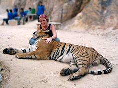 Chiang Mai - Tiger Kingdom