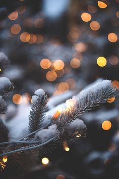 snow on pine tree branch
