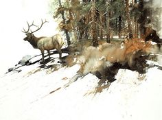 Solberg, Morton - High Country Elk #design, #composition, #artwork, #painting, #fineart, #color, #watercolor