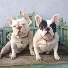 Nikki - Road Dogs & Rescue @roadogs Hollywood Couple ...Instagram photo | Websta (Webstagram)
