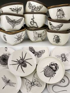 Hand-drawing Bugs on Ceramic! Fantastic or Disgusting? Laura Zindel's surreal ceramic creations combine high-quality home dishware with faux historical hand-drawn imagery inspired by Victorian Cabinets of Curiosity Pottery Painting, Ceramic Painting, Ceramic Art, Porcelain Ceramics, Vintage Ceramic, Casa Rock, Ceramic Pottery, Pottery Barn, Cabinet Of Curiosities