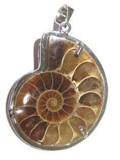 pendant ammonite fossil di giacobbi su Etsy, $47.50 #ammonite #fossil #fossile #pendant #jewelry