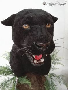 taxidermia falsa, pantera negra artificial Black Panthers, Fauna, Taxidermy, Mammals, Artificial, Black Panther, Animales, Blank Panthers