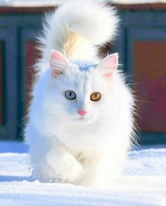 Cute Cartoon Animals Bunny not Cute Little Kittens And Puppies until Cute Animals Outline Cute Cats And Kittens, Cool Cats, Kittens Cutest, Ragdoll Kittens, Tabby Cats, Bengal Cats, Toyger Cat, Cutest Cats Ever, Birman Cat