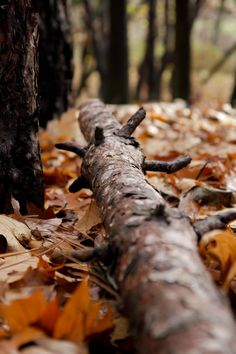 Image discovered by dead_silent. Find images and videos about autumn, fall and leaves on We Heart It - the app to get lost in what you love. Autumn Day, Autumn Trees, Autumn Leaves, Autumn Forest, Winter, Autumn Song, Wild Forest, Deep Autumn, Autumn Morning