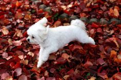 Ah yes, the running of the crunchy leaves. Inspirational, really.   27 Dogs Freaking Out About Autumn Leaves