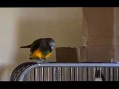 She gave this bird some cardboard.  See what happens next!